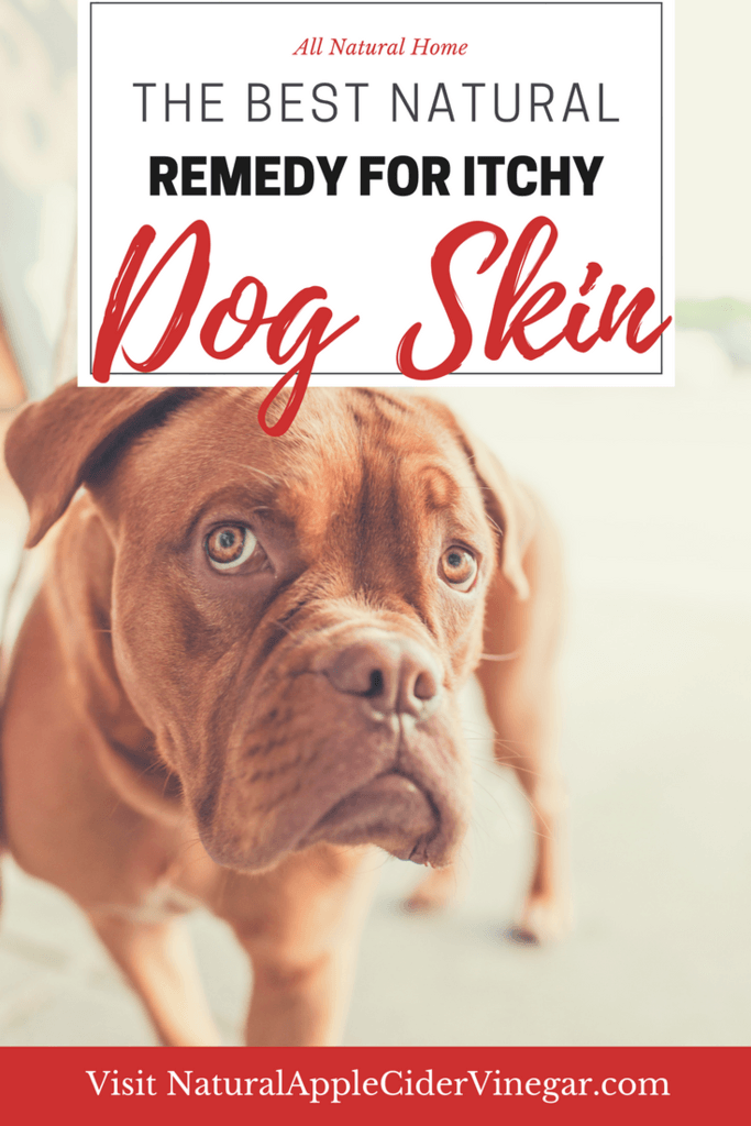Using Apple Cider Vinegar For Dogs Skin Natural Itchy