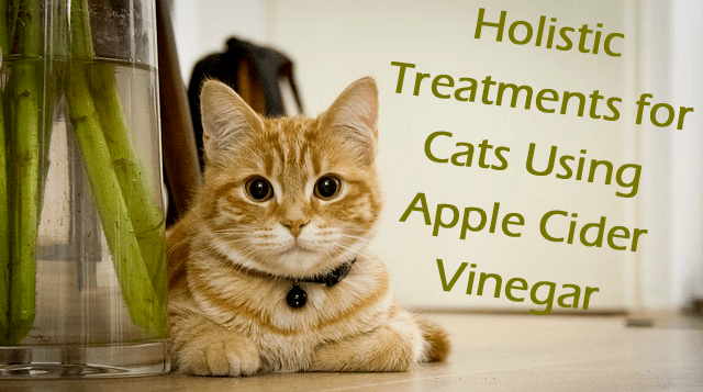 Natural Cure For Yeast Infection In Cats Ears