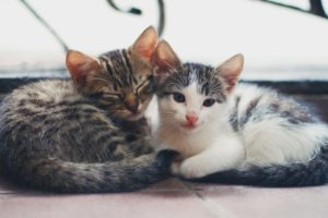 All Natural Joint Pain Remedy For Cats