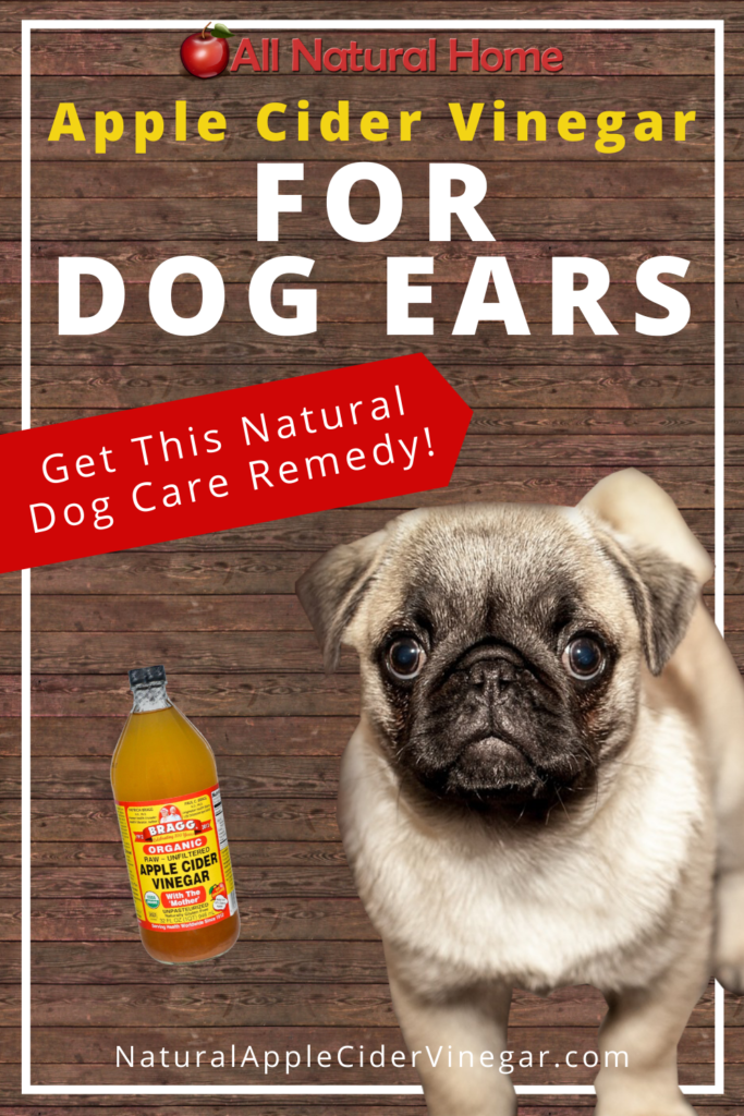 Apple Cider Vinegar for Dog Ears Home Remedy - All Natural